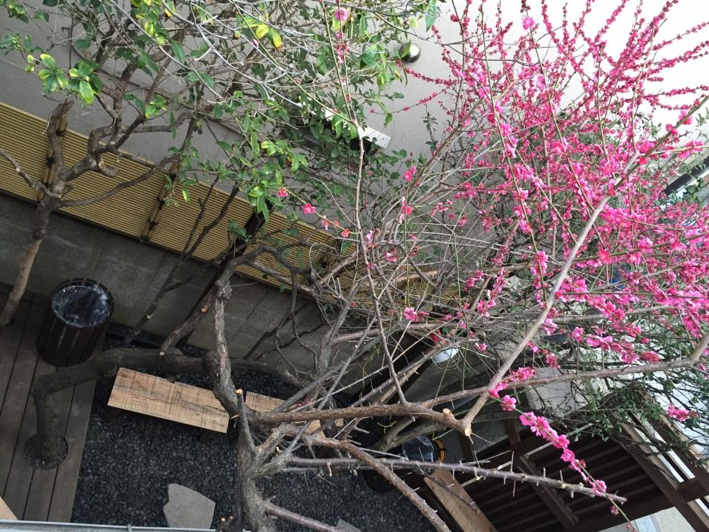裏参道ガーデン2階テラス